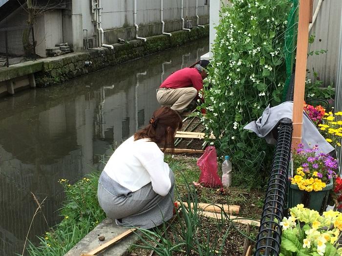 4.4園芸野菜①