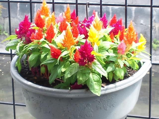 ケイトの花、2